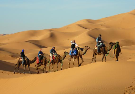 Camels Excursions